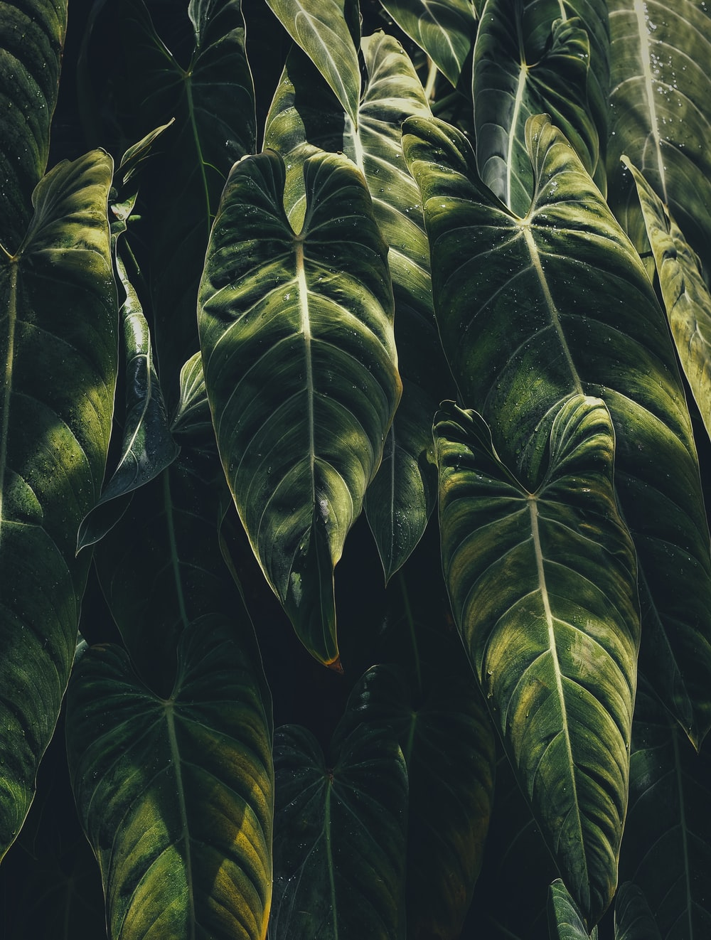 Tropical Leaf Pictures Download Free Images On Unsplash All from our global community of videographers and motion graphics designers. tropical leaf pictures download free