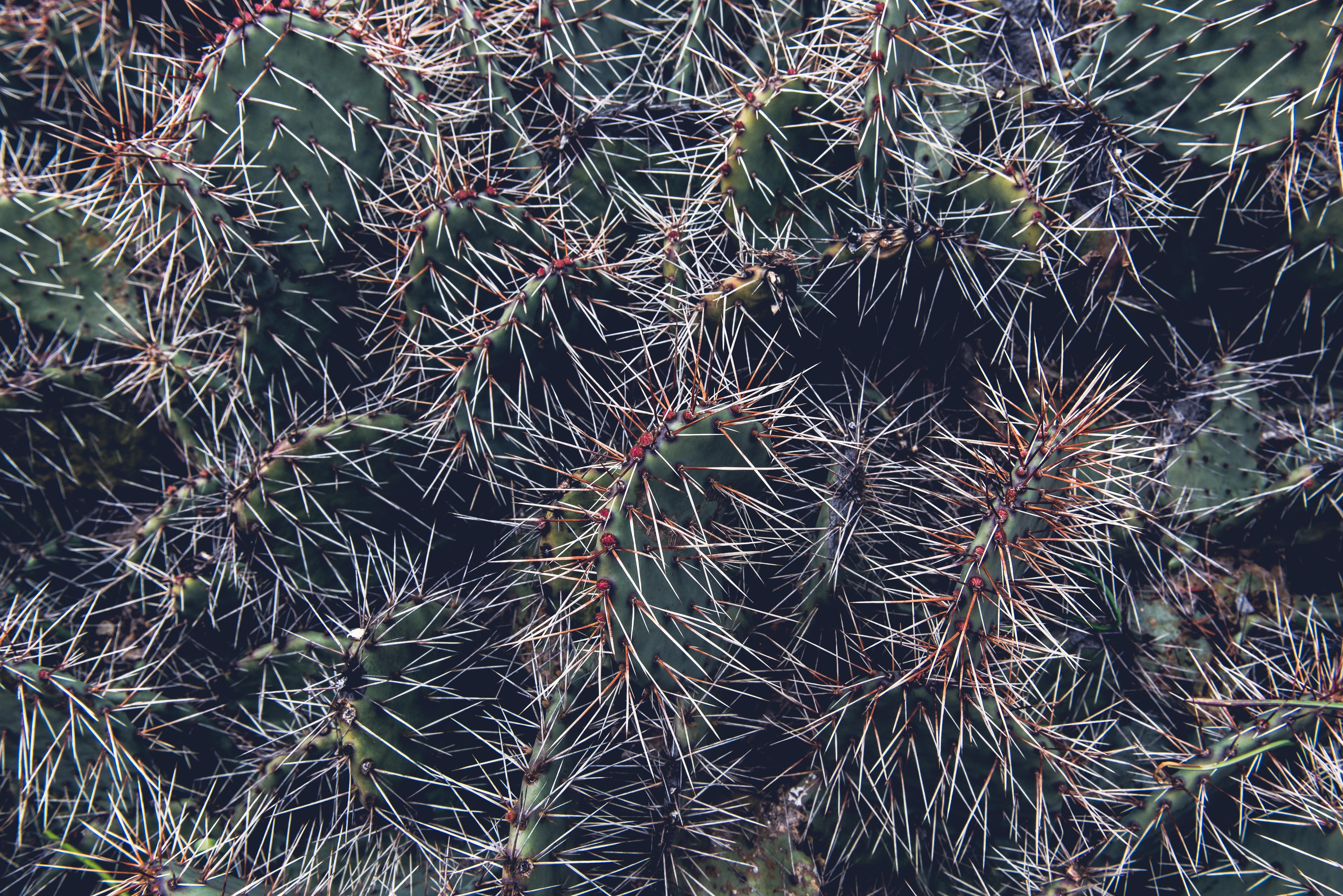 cactus during daytime