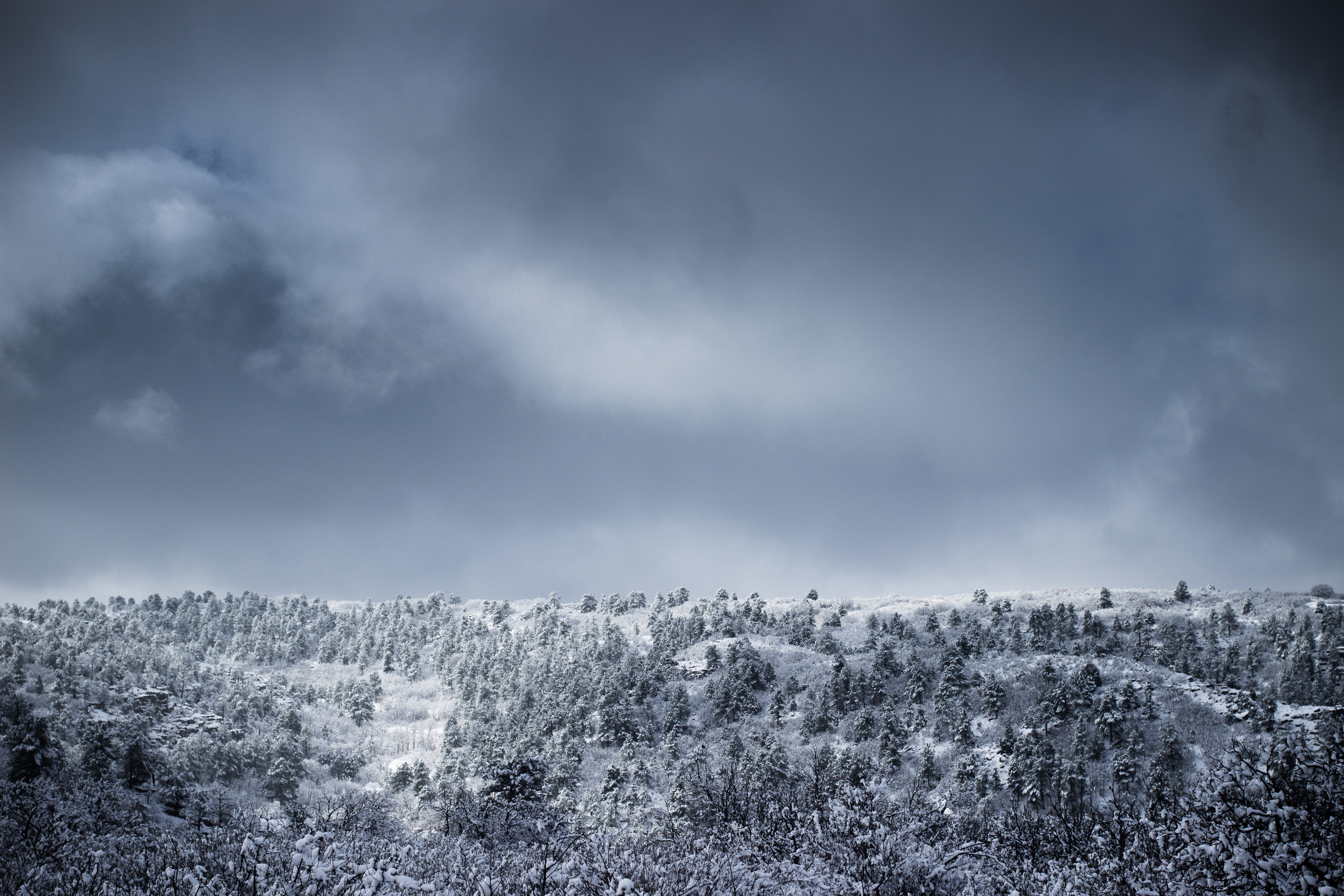 A coniferous forest stretching across a snowy hill