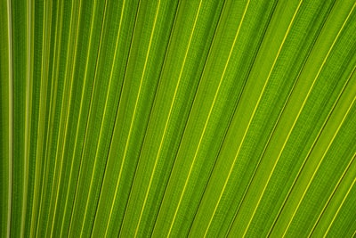 closeup photography of fan palm leaf leafe zoom background