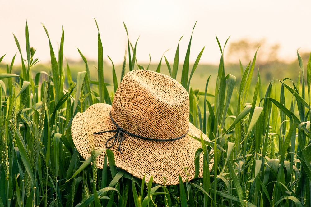 brown woven hat on green plant