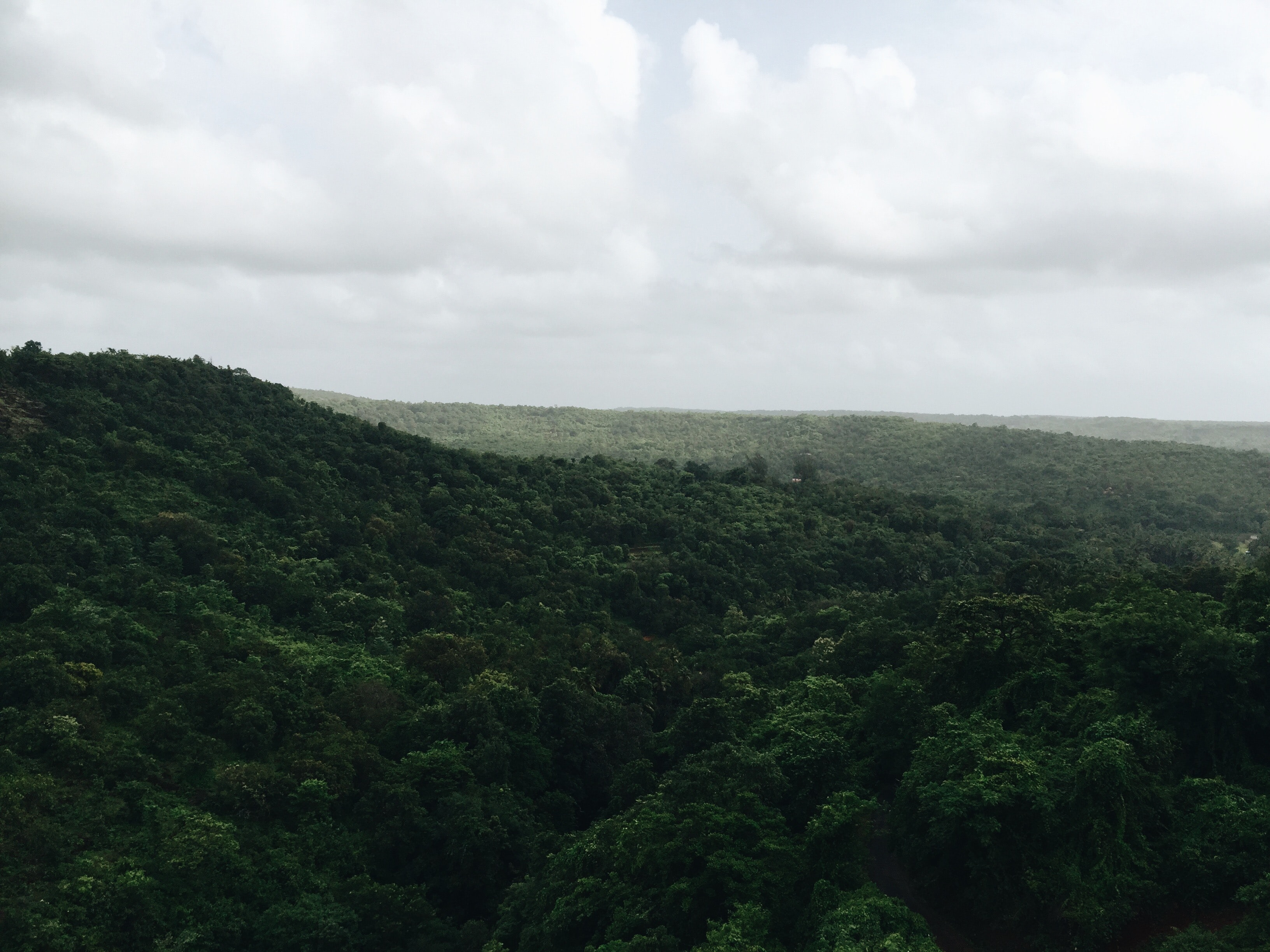 A dark green forest stretching to the horizon in Lonavala, India