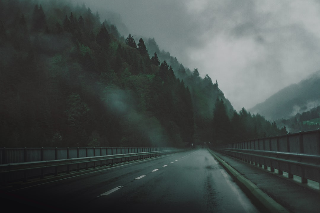Road by the dark woods