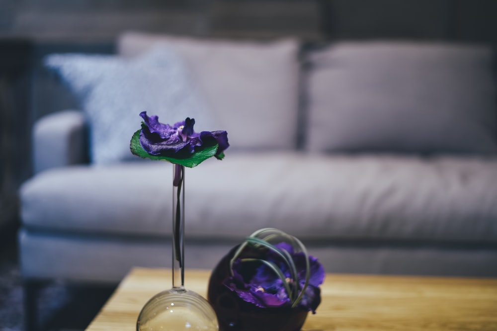 purple petaled flower on clear glass vase
