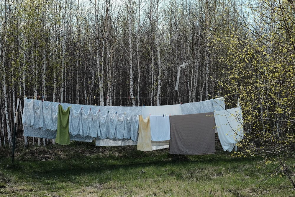 gray text hang to dry near forest tress