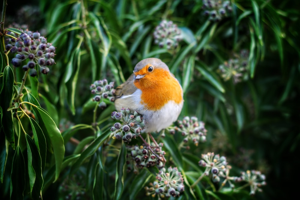 white and yellow bird perching on green petaled flower