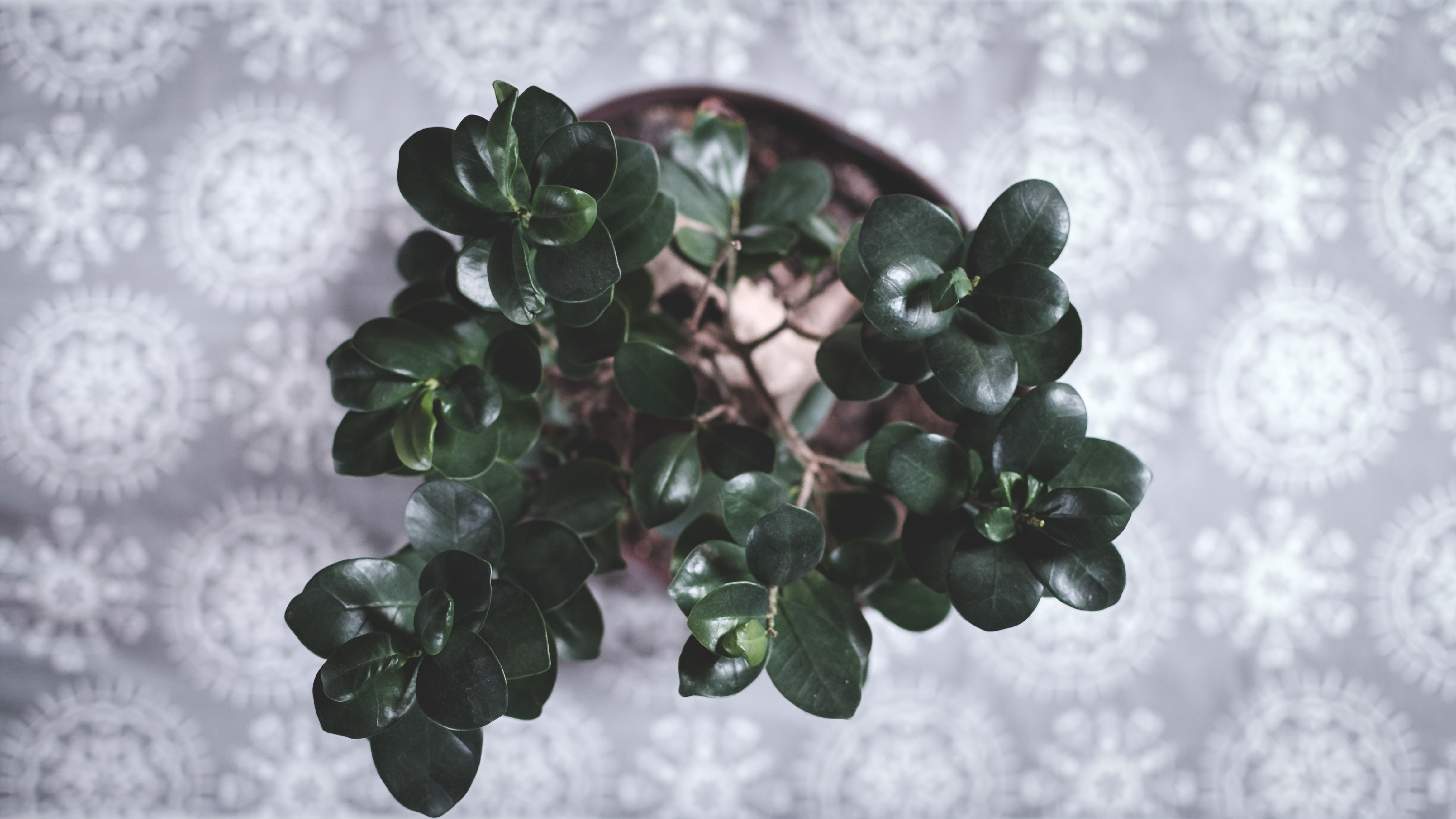 Small green houseplant on a decorative tablecloth
