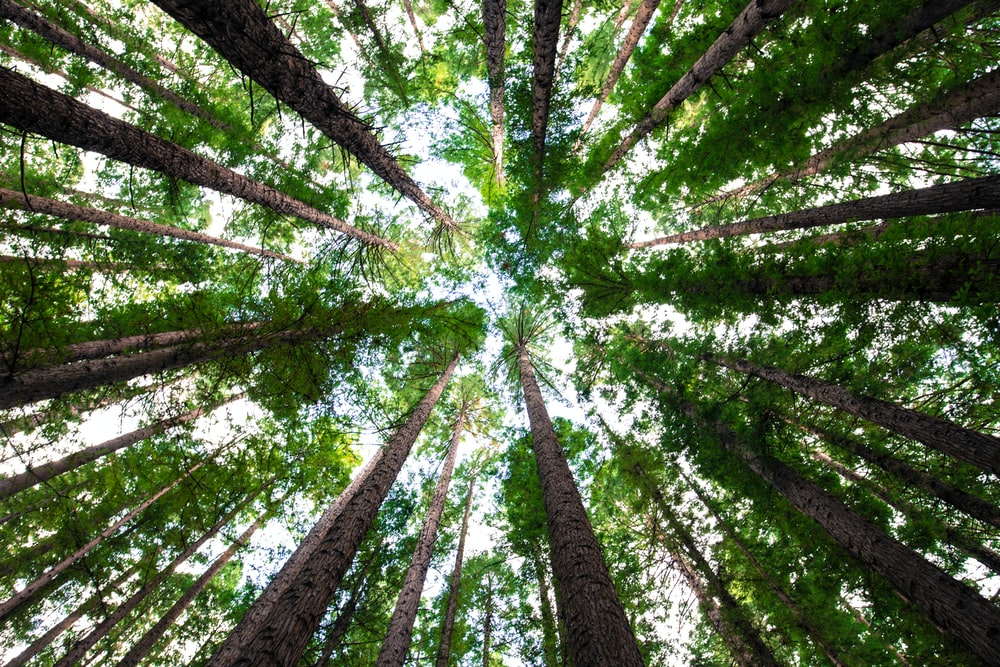 low angle photography of green trees