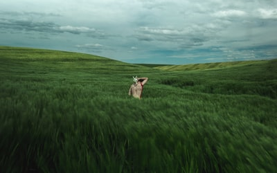 person in green grass field surrealism zoom background