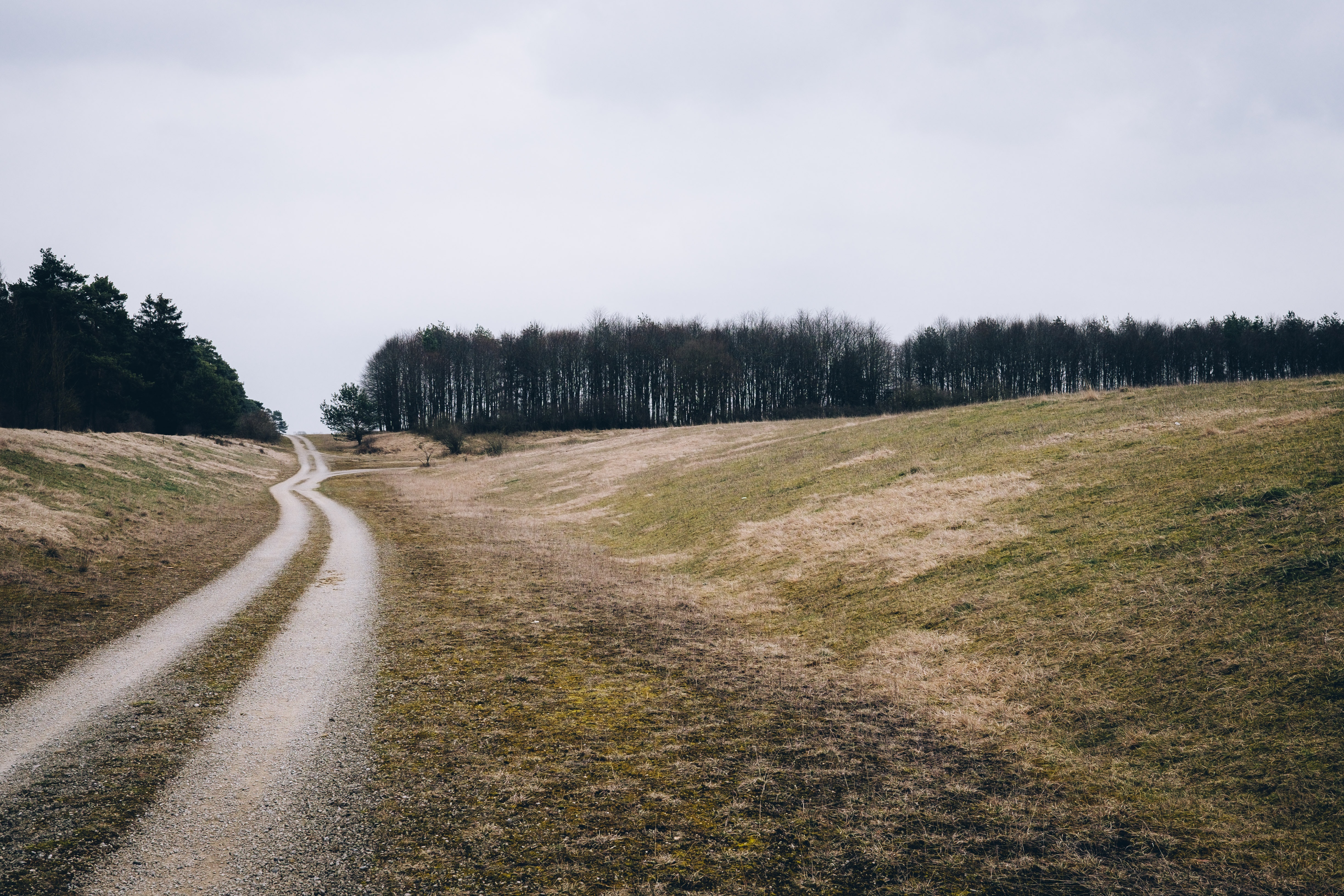 A dirt path in a rural area near a forest in Bavaria