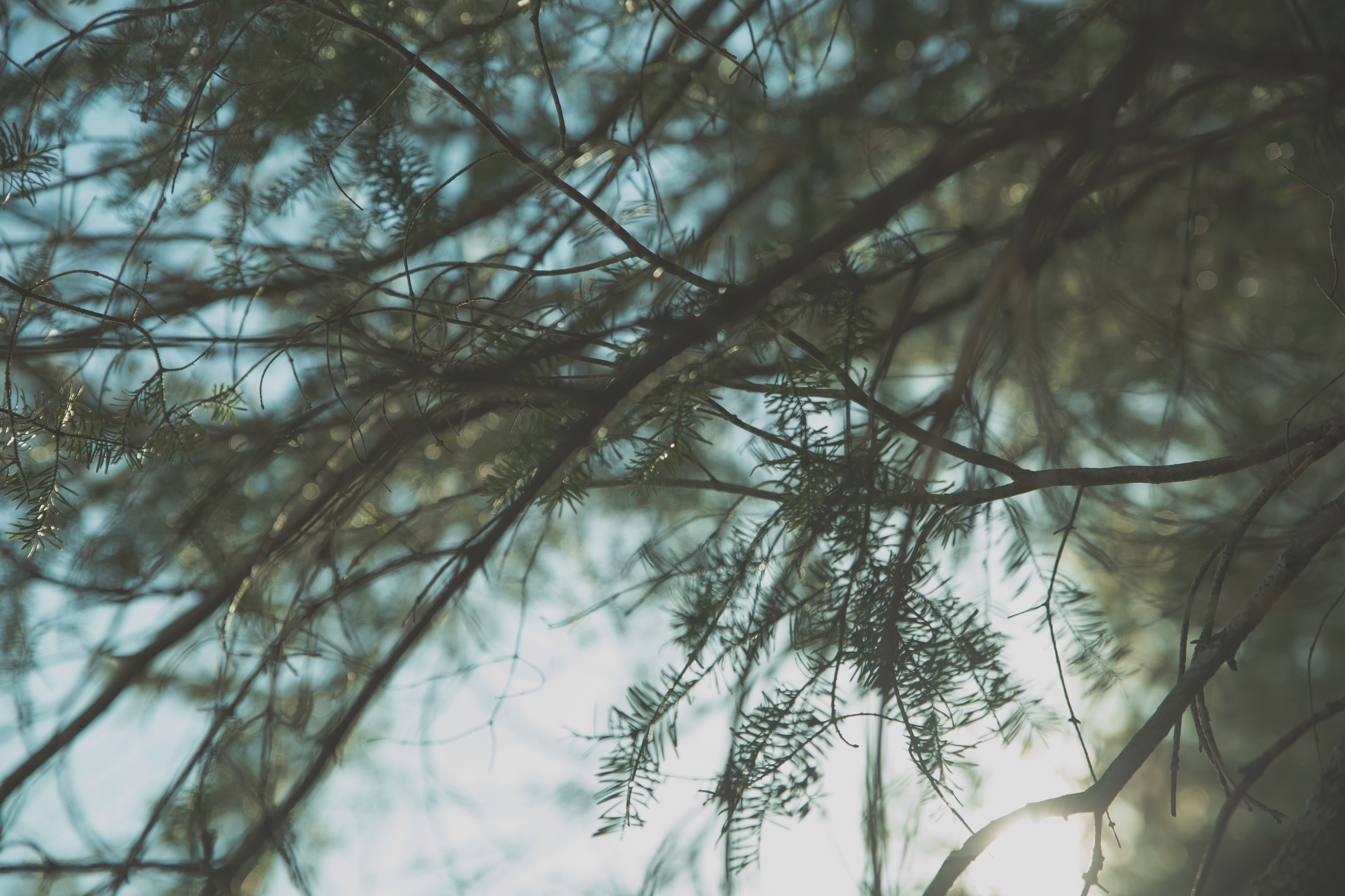Tree branches covered with green needles against a blurry background