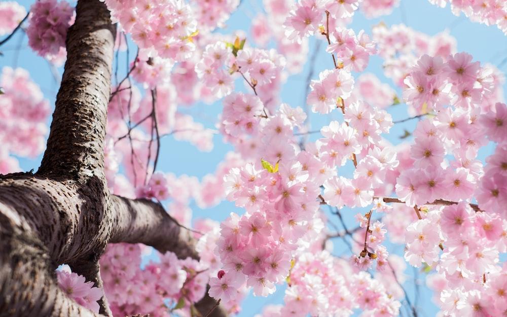Hd Wallpaper For Desktop Spring