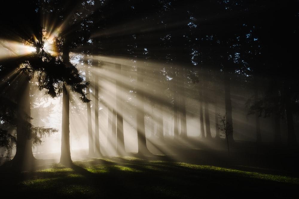 sun rays through silhouette of trees