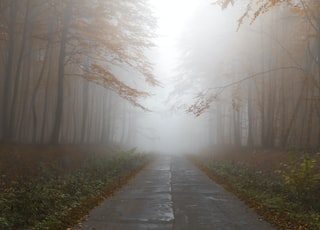 gray empty road between trees