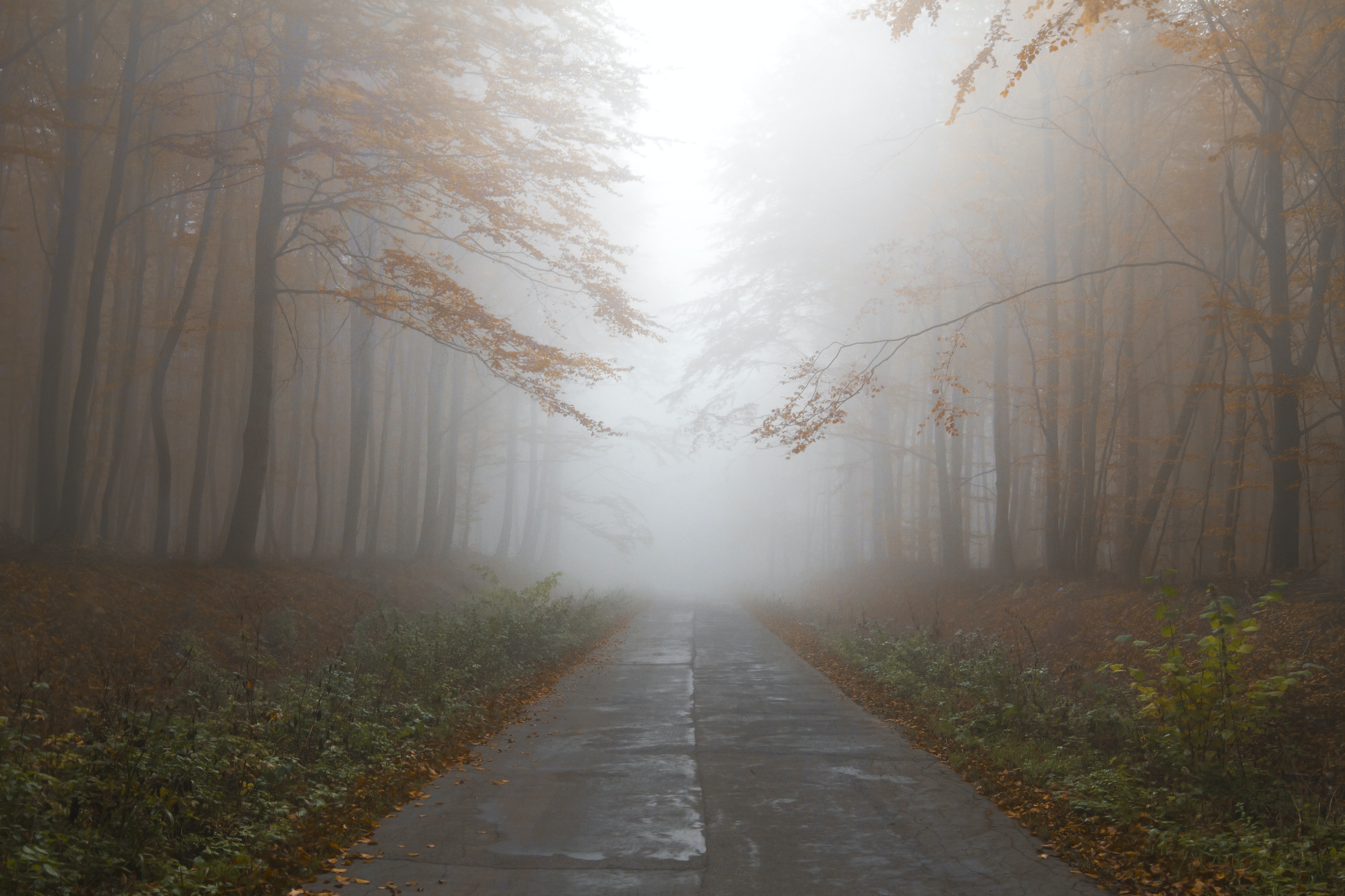 A foggy forest road in rural Elblag