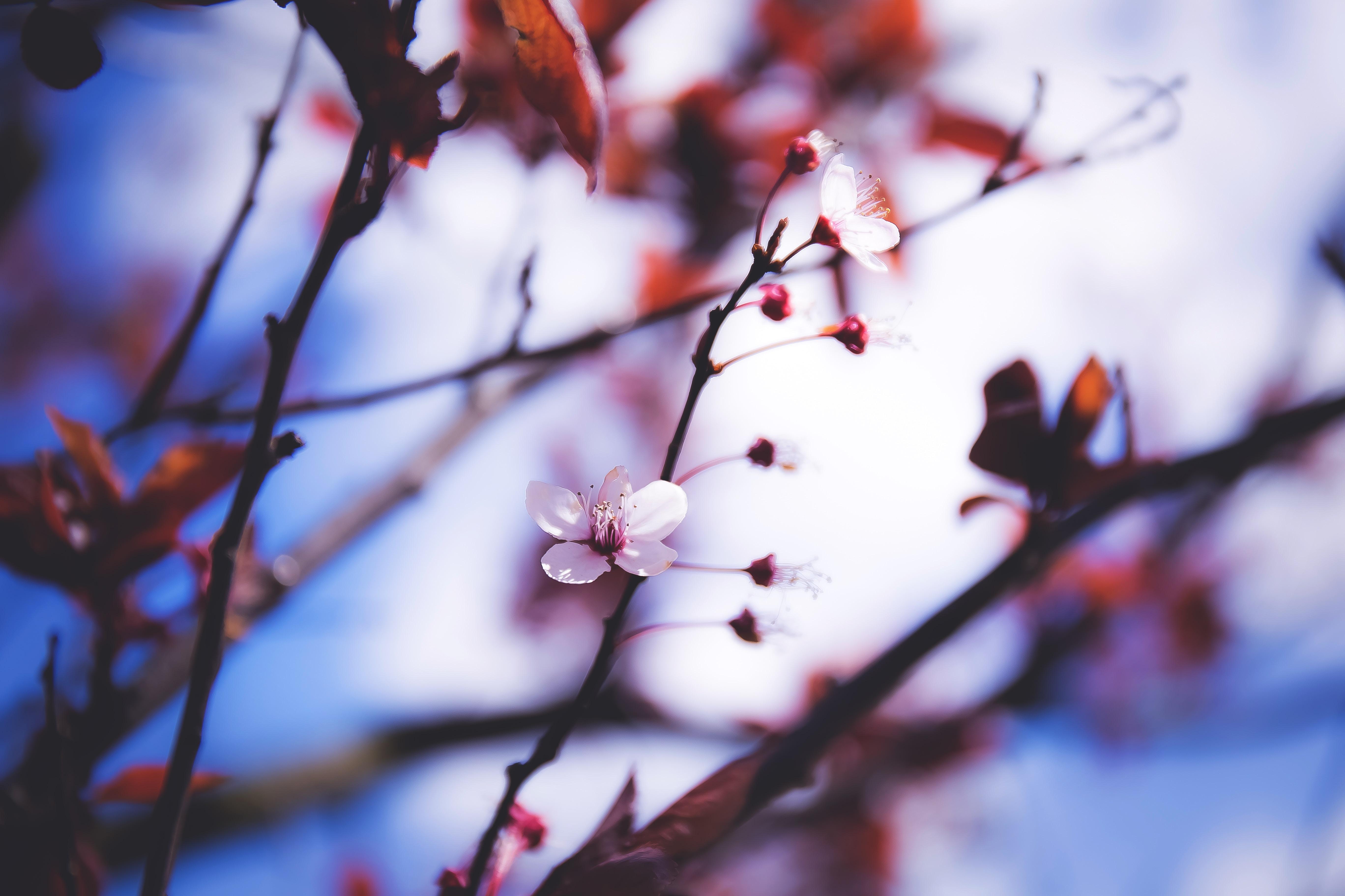 depth of field of white petaled flower