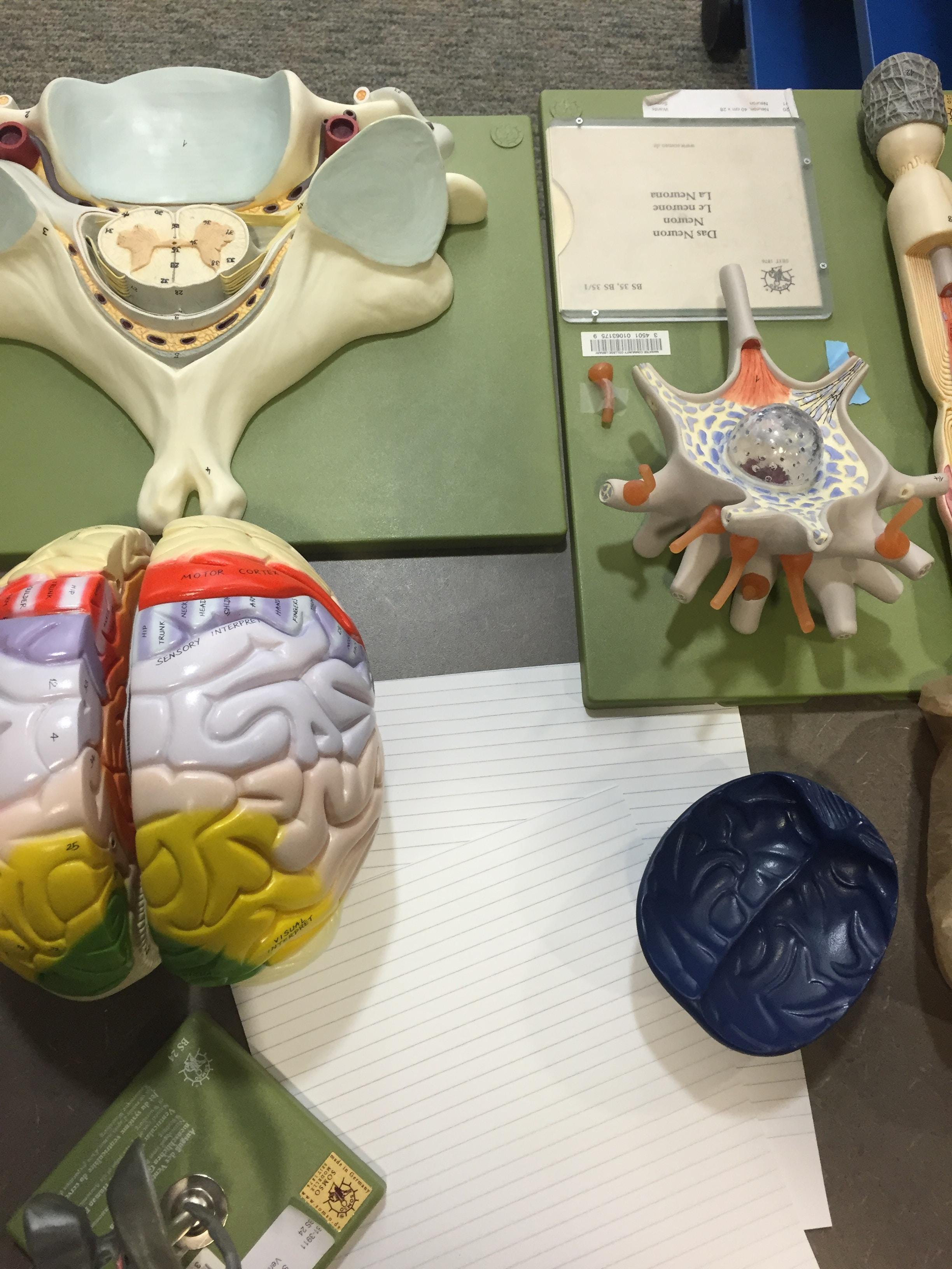 A fake brain.
