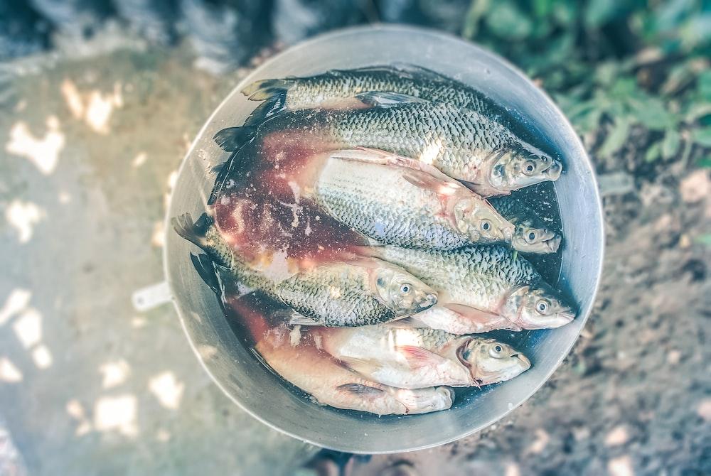 fish on stainless steel bucket