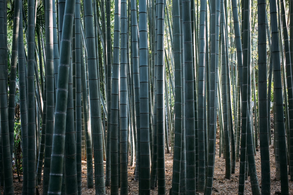 green bamboo tree during daytime