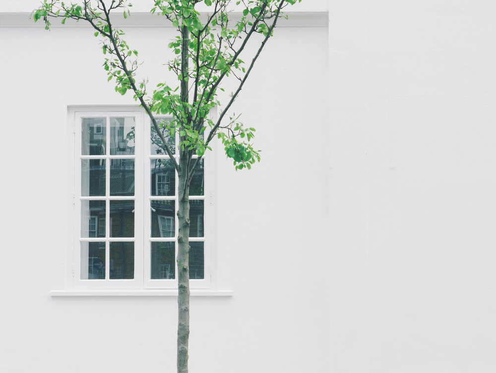 green leafed tree beside white concrete building with glass window