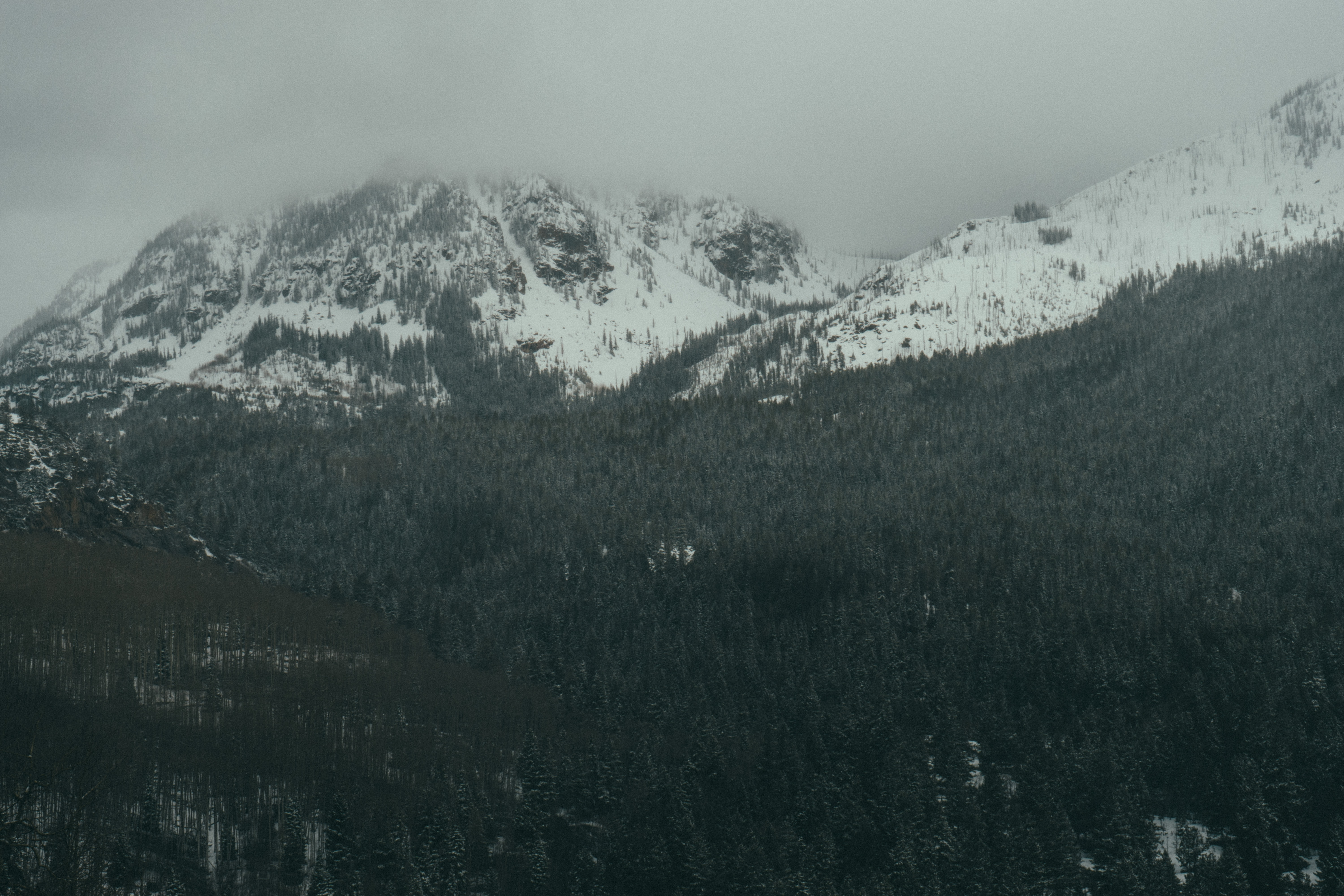 Trees on a hill in Aspen and a snowcapped mountain with the peak covered in fog