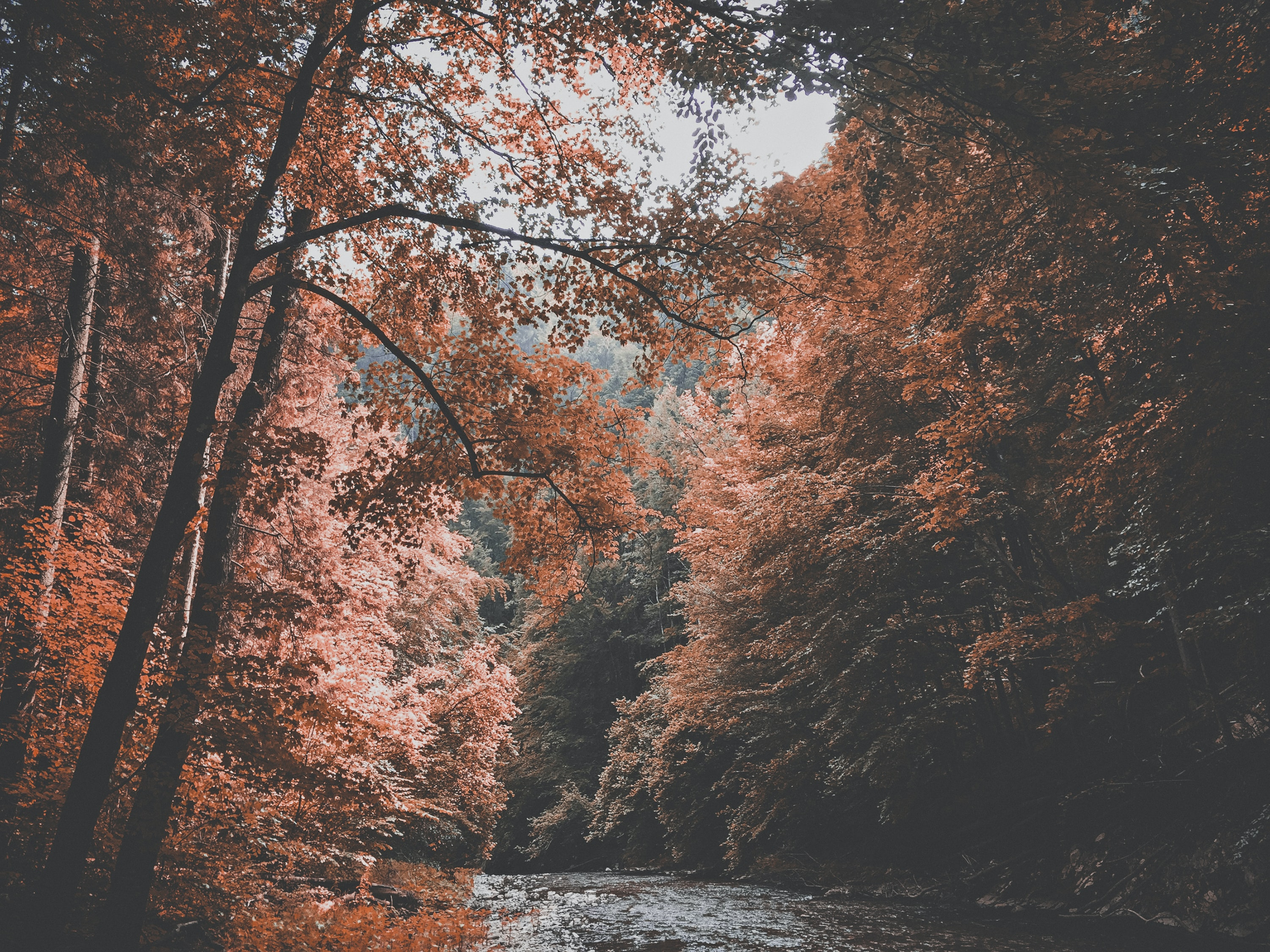 Red autumn leaves on trees over a fast-flowing stream