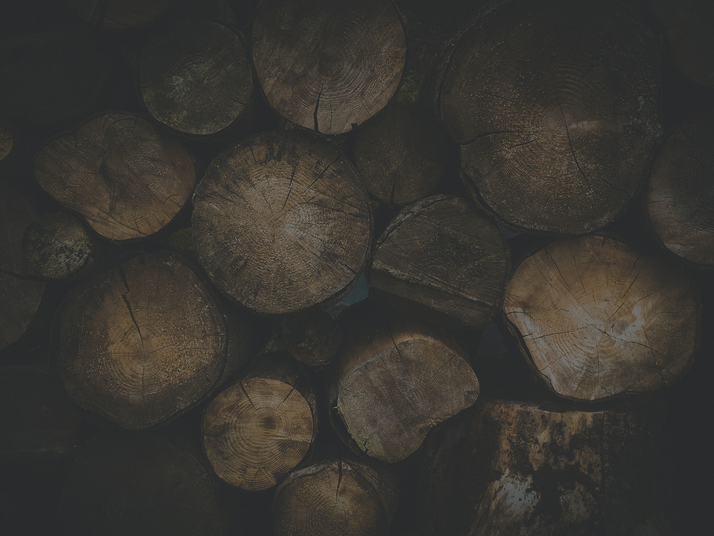 pile of wood log