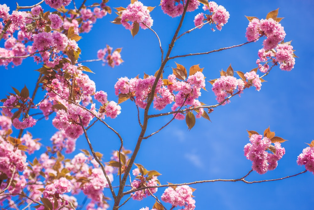 pink flowers plant under blue sky during daytime