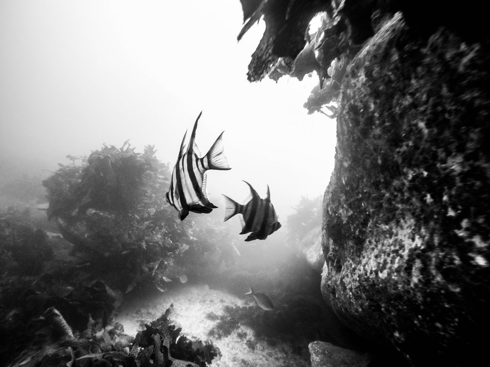 two fish underwater