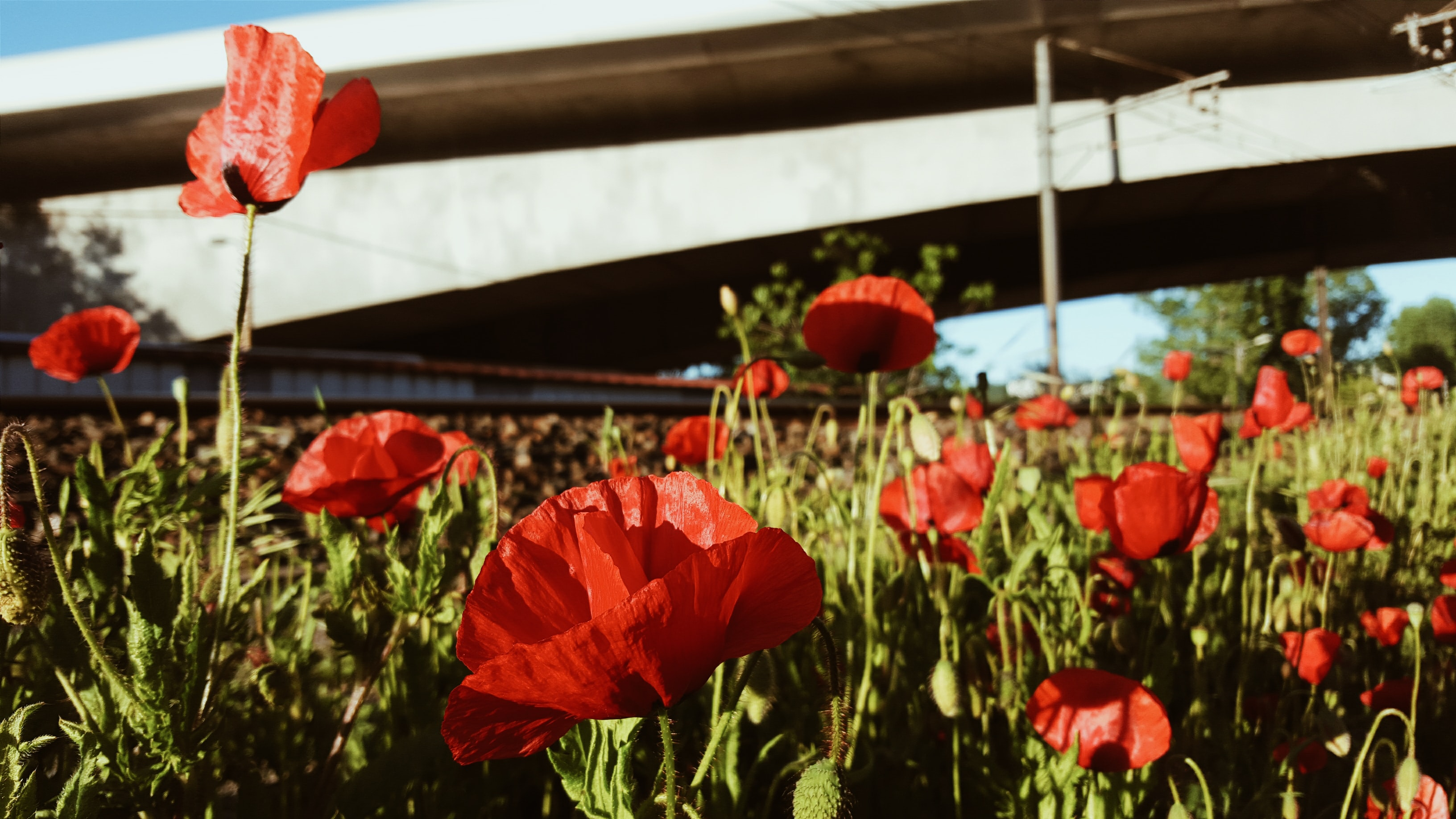 A field of red poppies near a large concrete structure