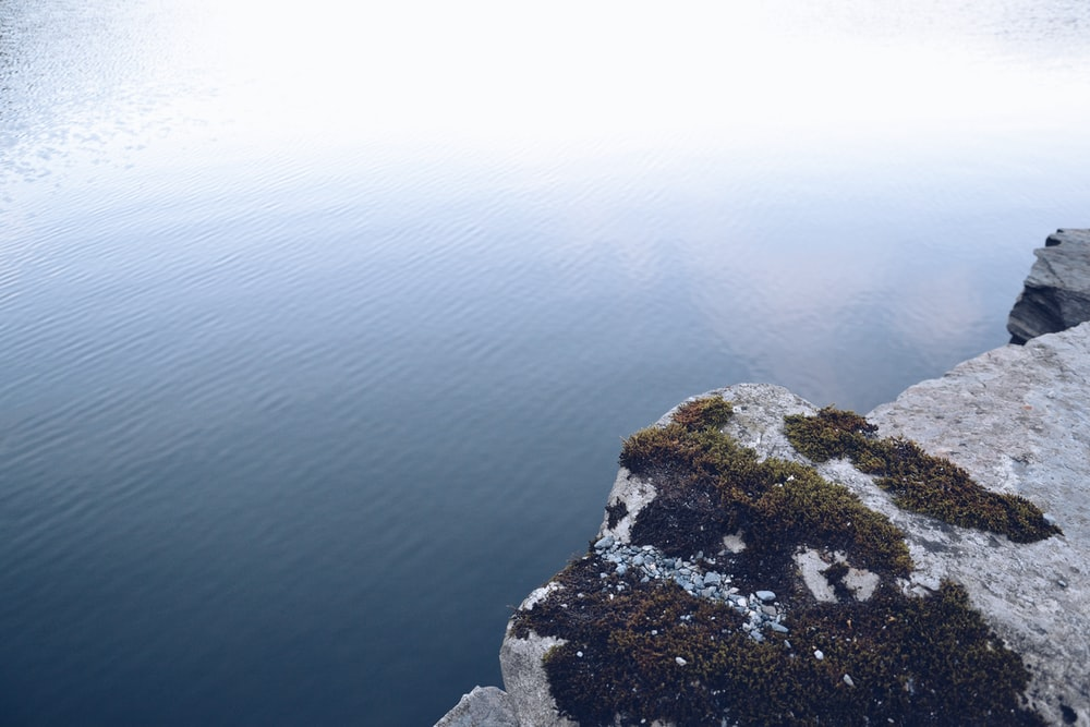 green algae on rock hill near body of water
