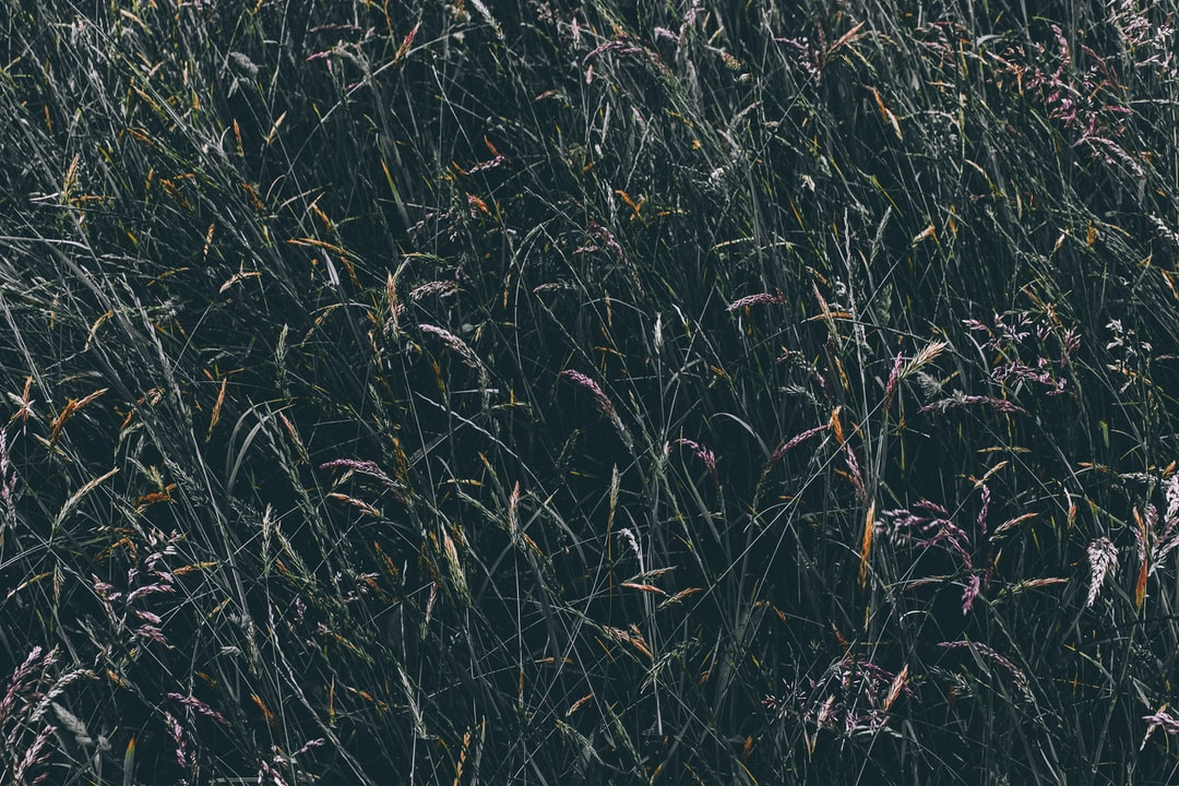 Sprigs of grass