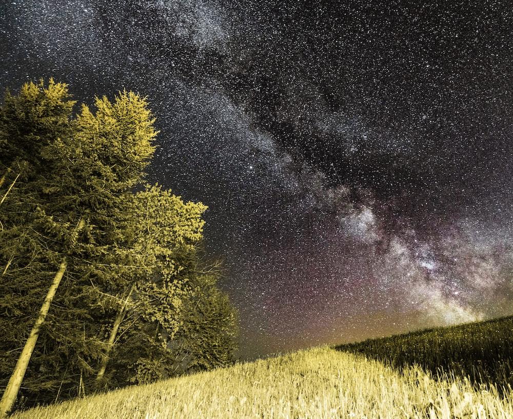 green trees beside green grass field under star sky
