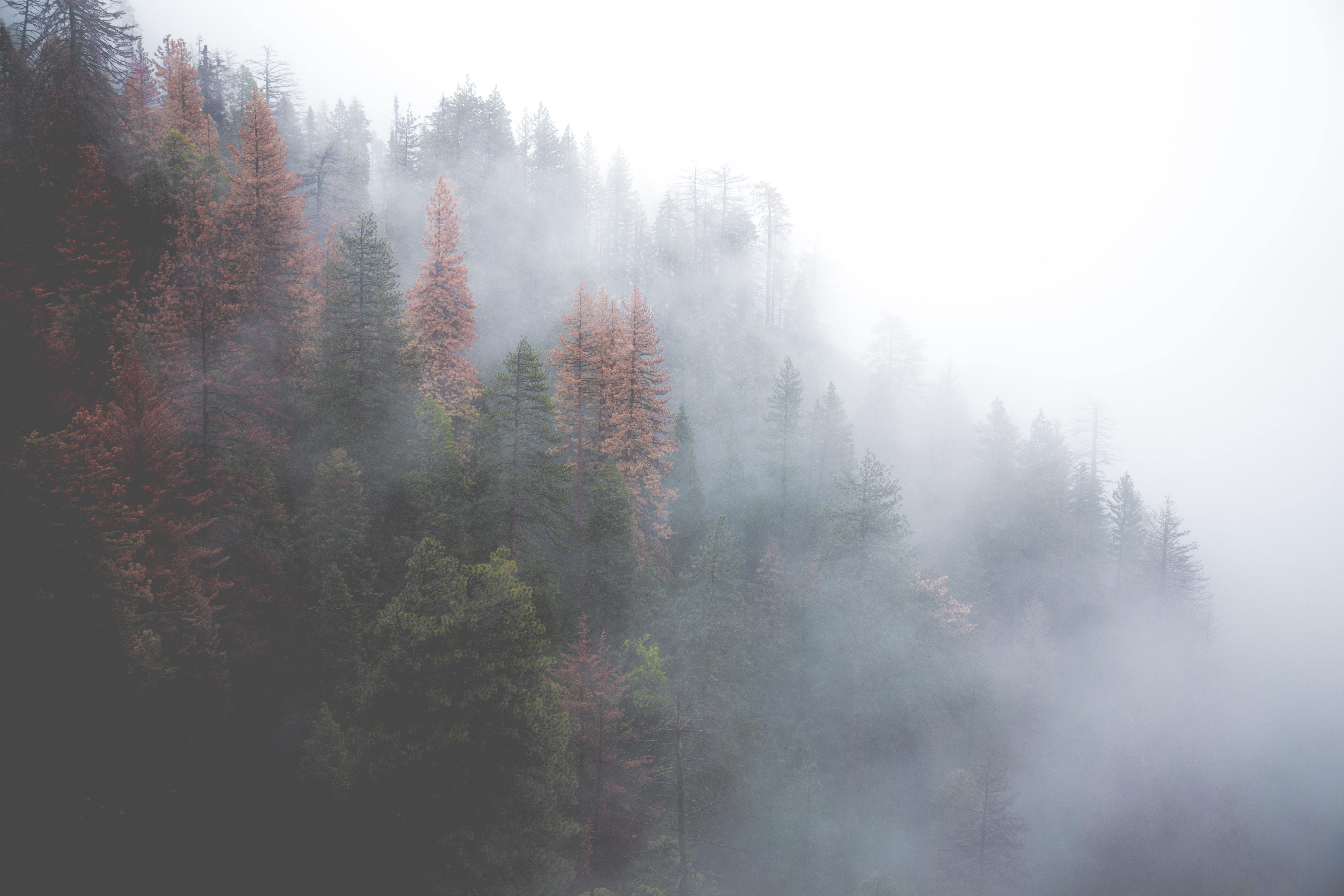 Brown and green trees in a forest enveloped in mist