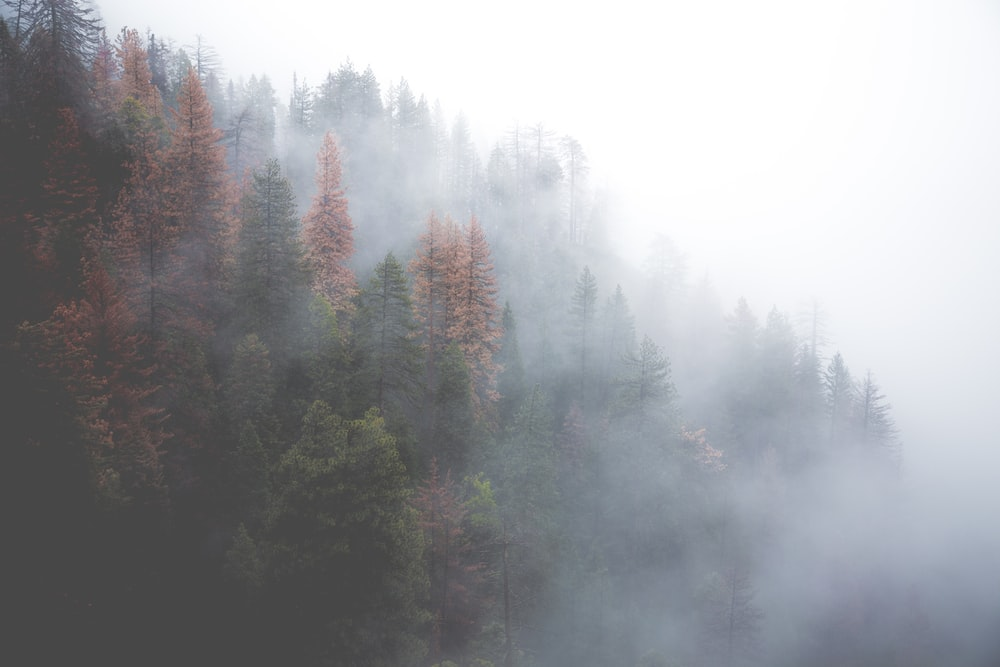 green forest covered with fog