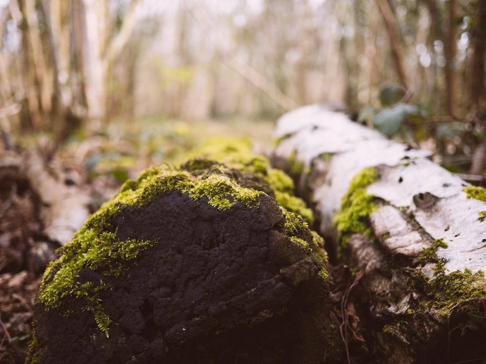 green moss on logs