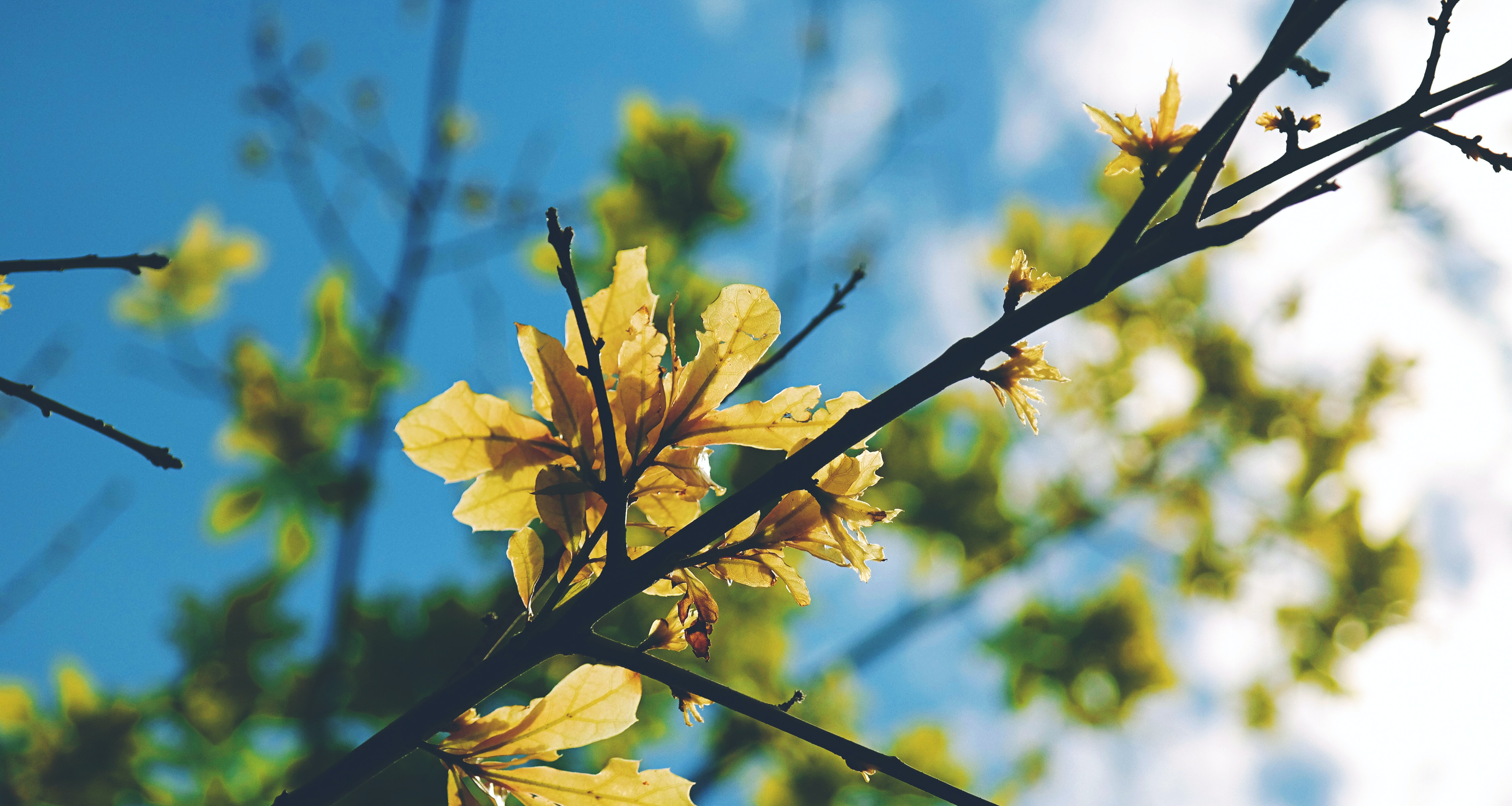Macro tree branch with yellow flower and green leaf with blue sky in Spring