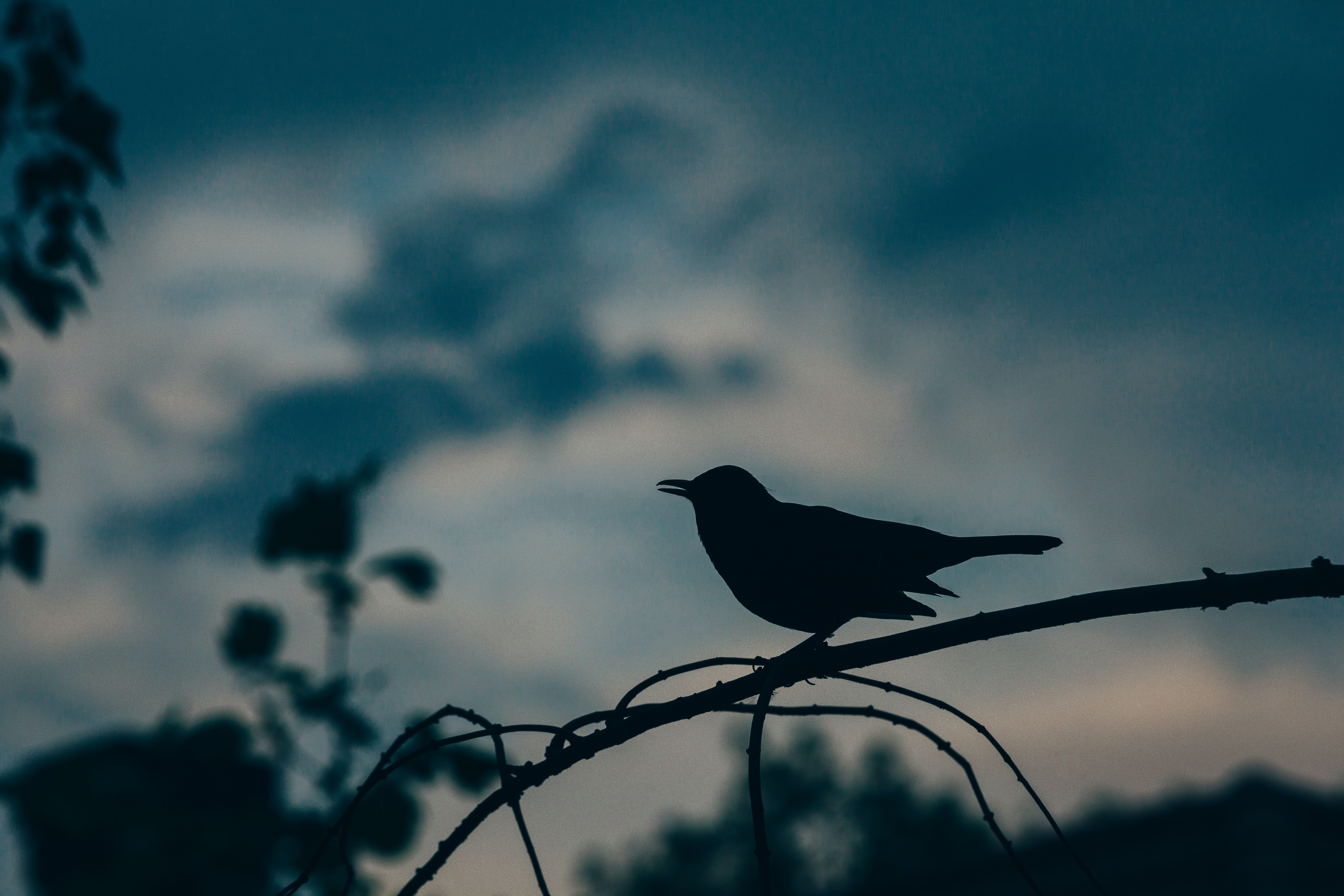 Silhouette of a bird perched on a branch against a cloudy evening sky