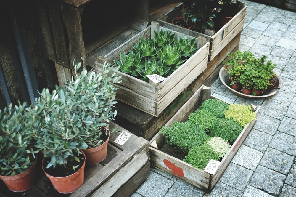 boxes of green leafed plants on grey pavement