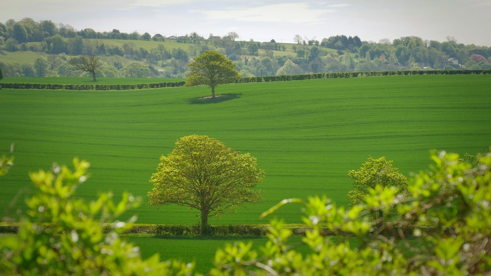 green tree in the middle of grass field