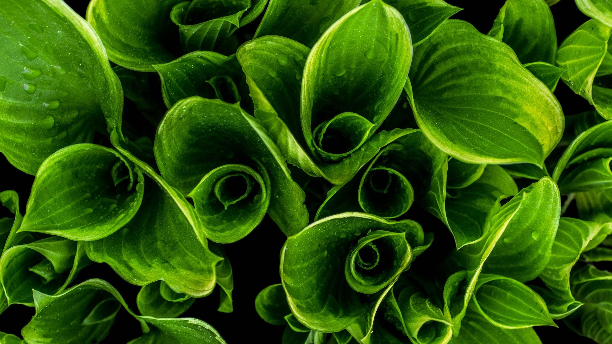 植物の知性