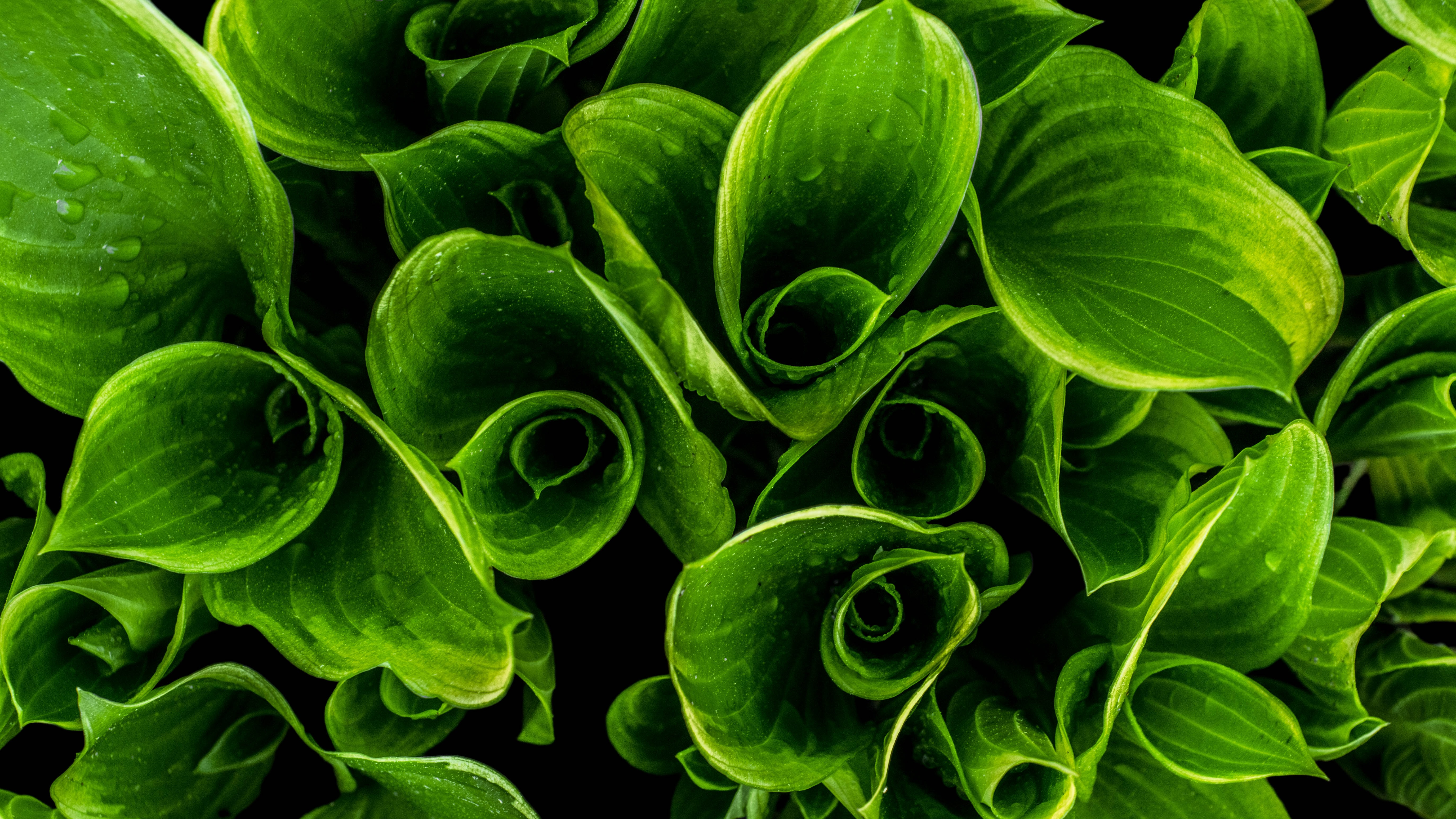 closeup photo of green leafed plants