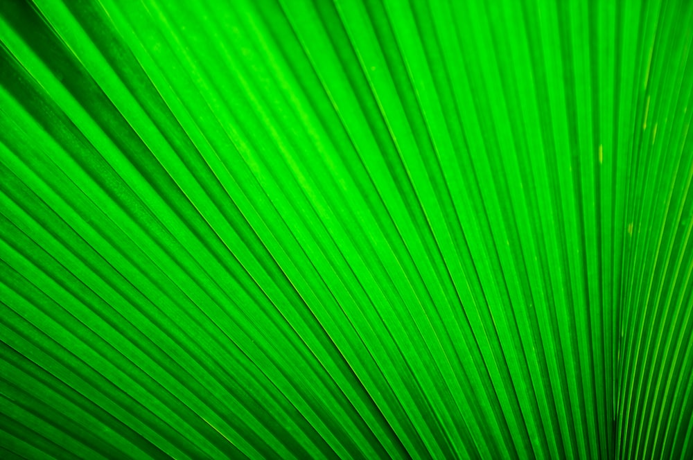green pleated textile