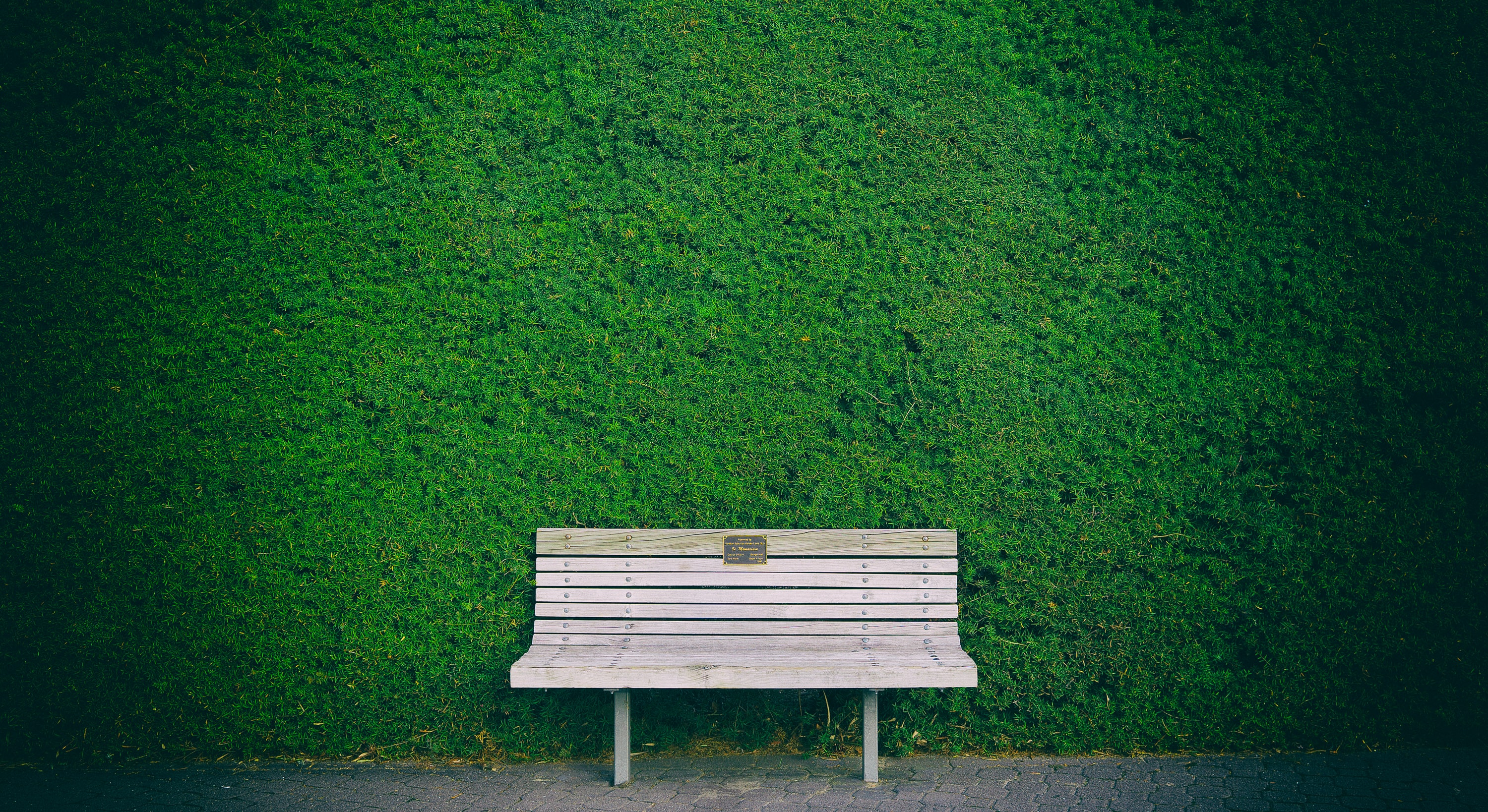 empty white wooden bench beside green wall