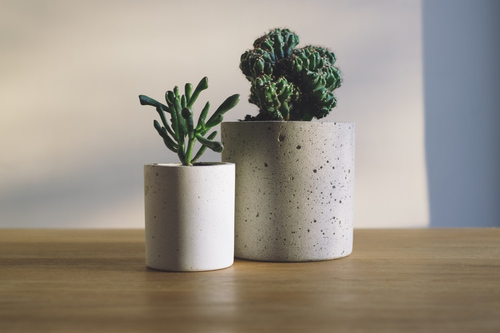 shallow focus photography of potted plants