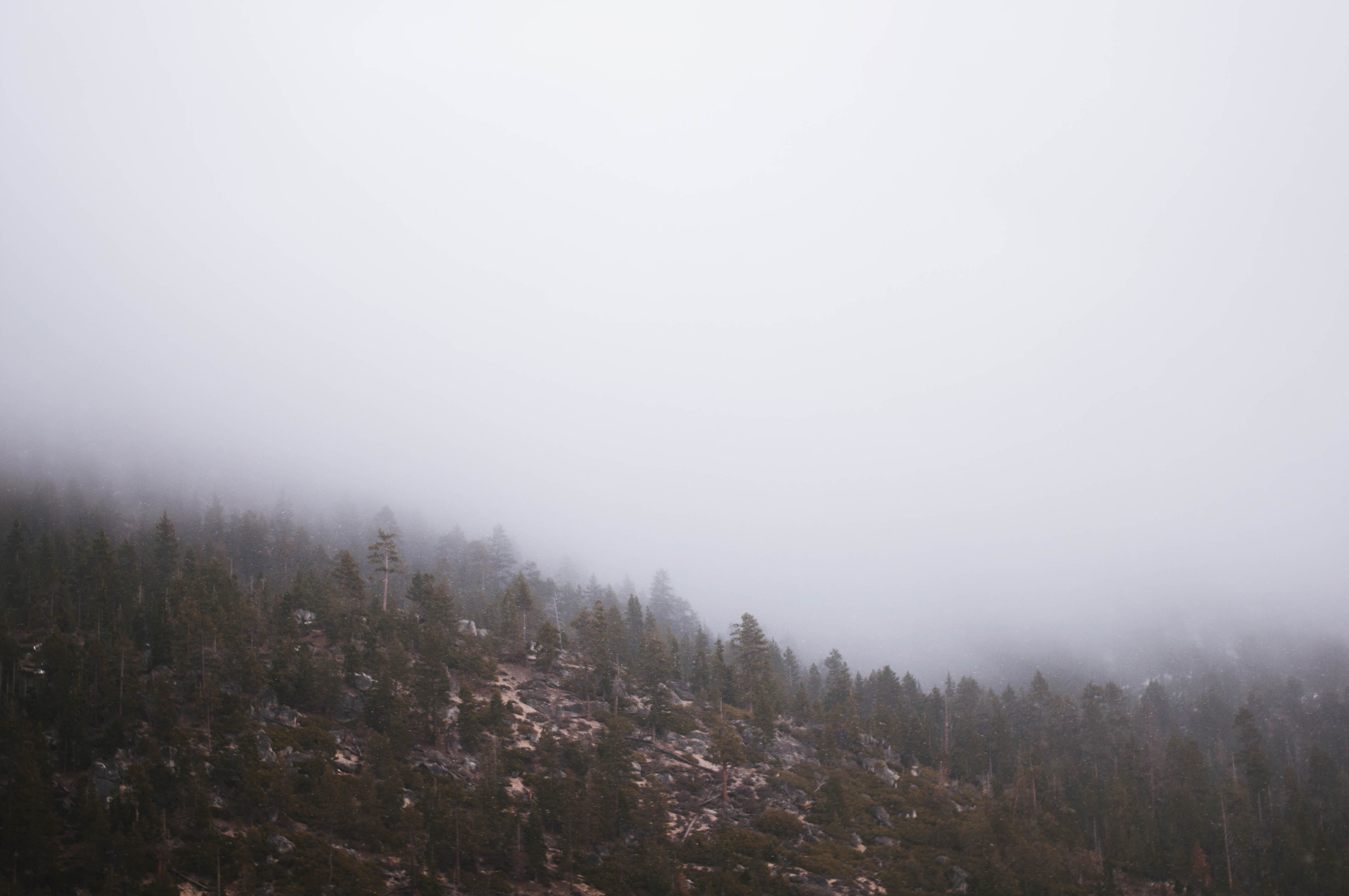 Gray mist over a windswept forest near Lake Tahoe