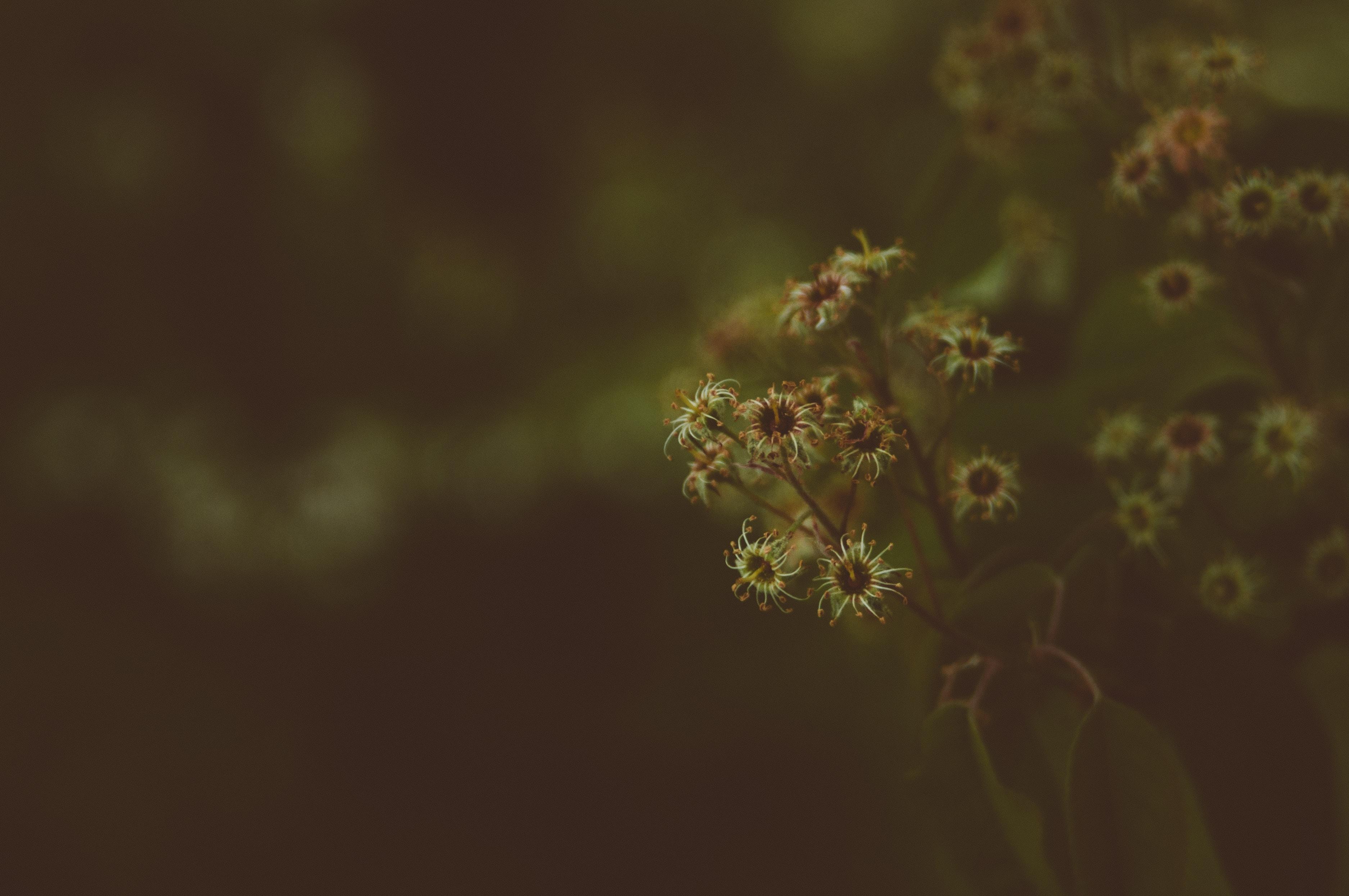 A dim close-up of dry flower heads