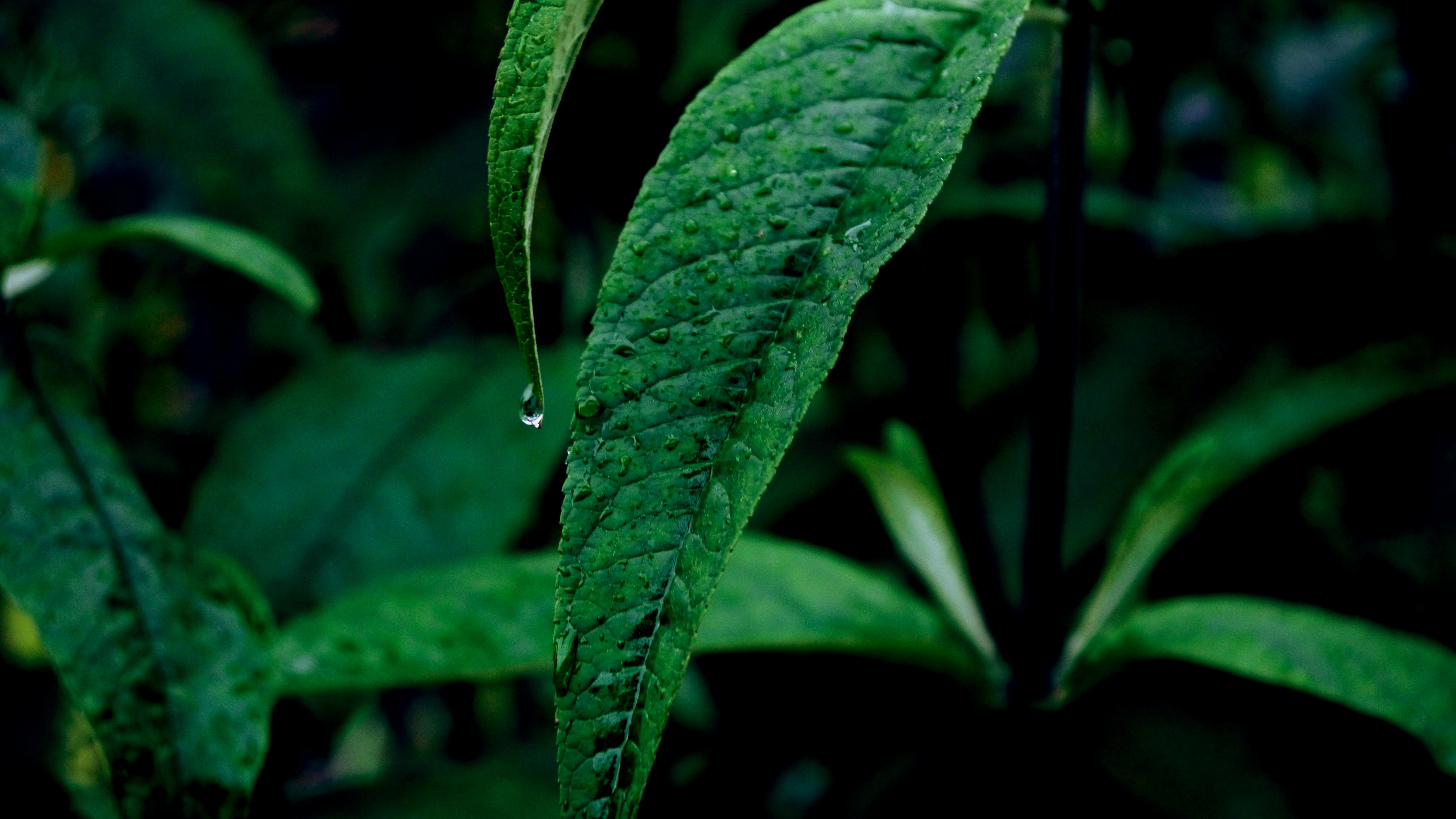 close up photography of green leaves