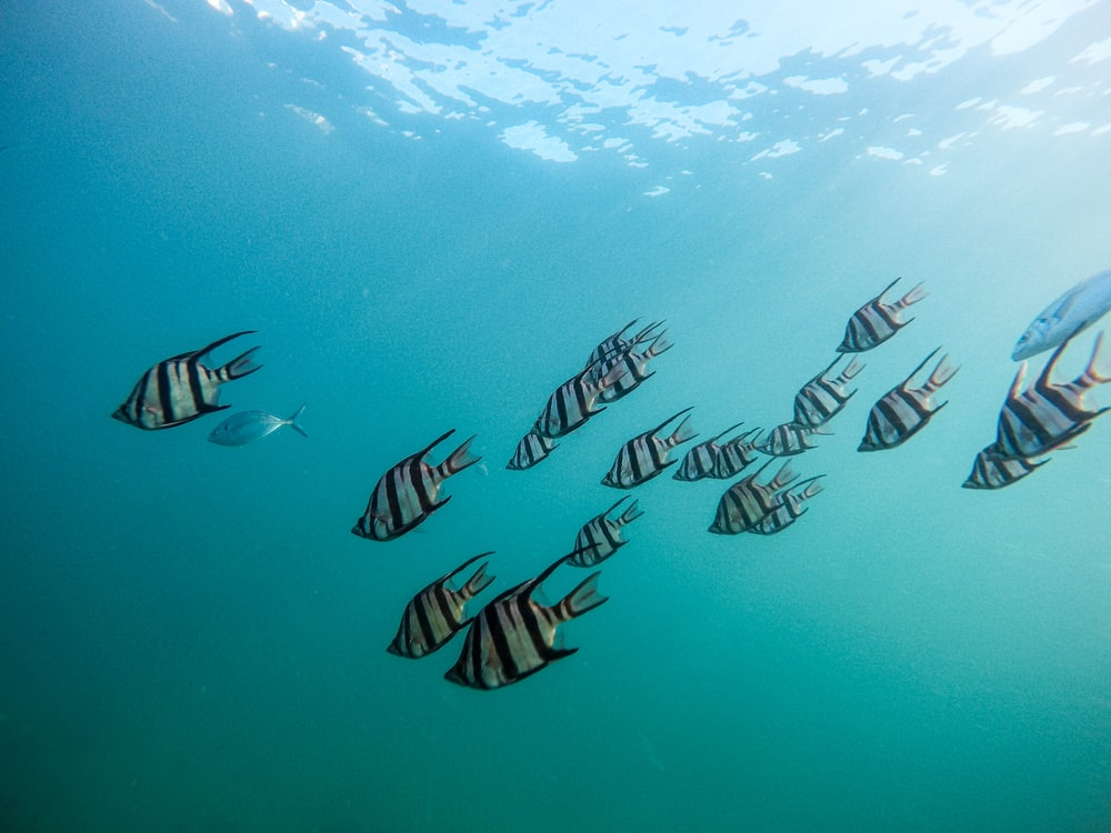 grey school of fish under water