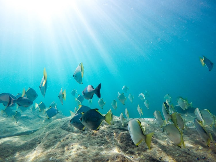 Water fish ocean and flying fish hd photo by john cobb for Sea water fish
